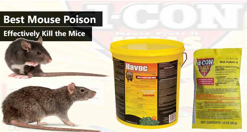Best Mouse Poison